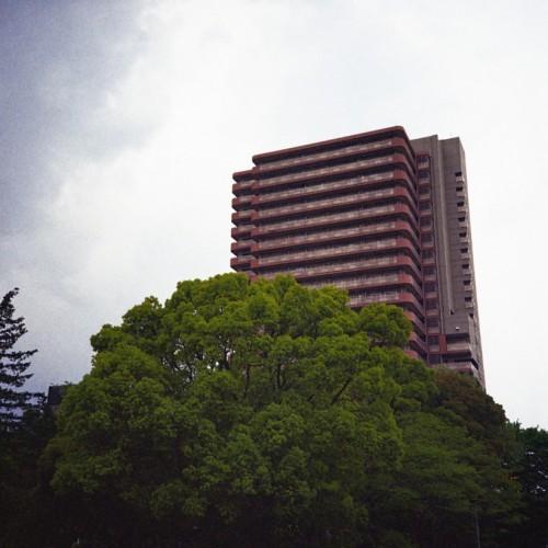 公園の大きな木