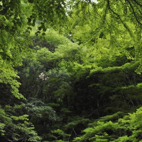 貴船神社周辺の林