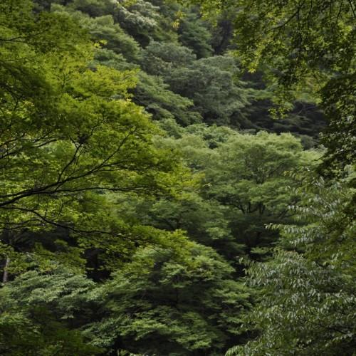 貴船神社周りの林
