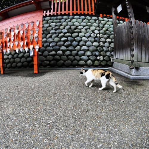 猫とお稲荷さんの札