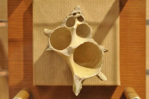 貝殻の断面