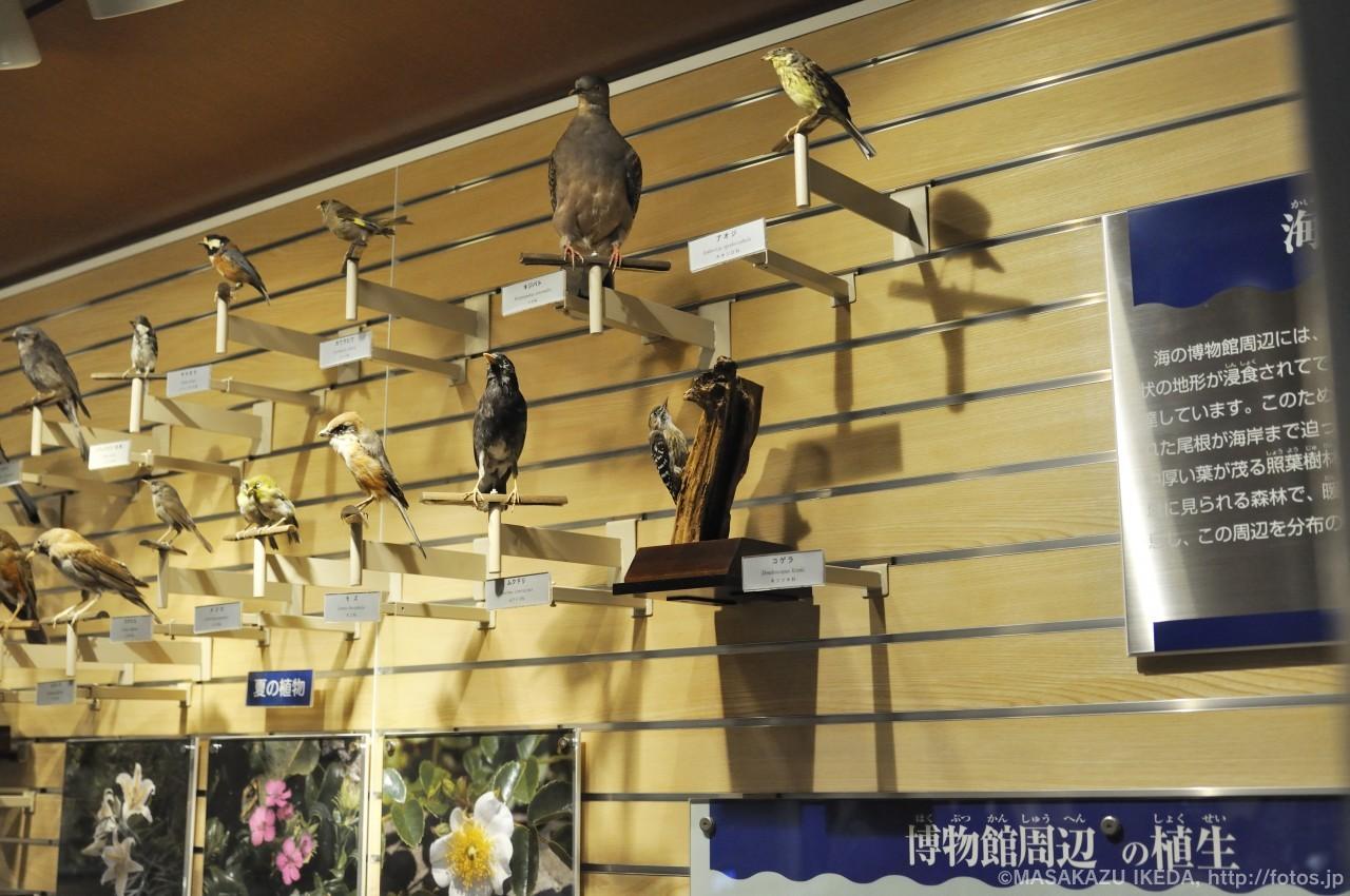 海の博物館をとりまく自然 鳥たち