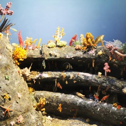 海の博物館をとりまく自然 海草