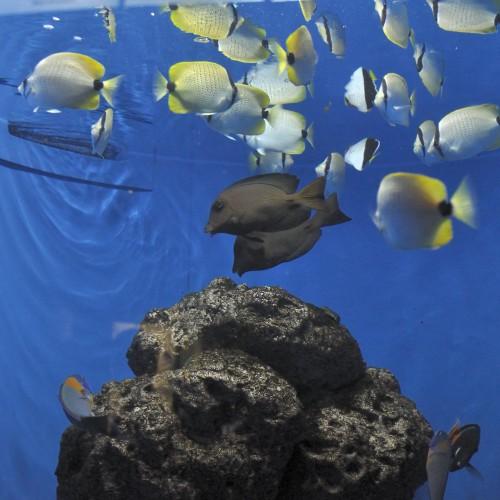 世界の海の魚たち