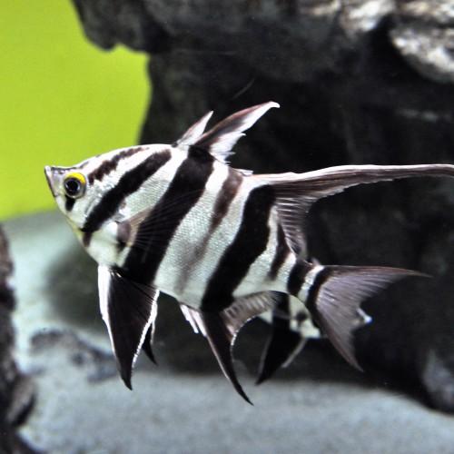 葛西臨海水族園の展示