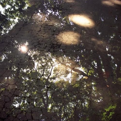 多重露光作品「木漏れ日」