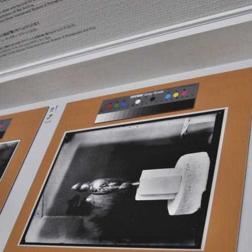 ヨコハマトリエンナーレ2014の展示作品