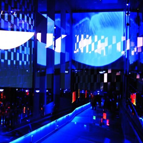 すみだ水族館でクラゲ万華鏡トンネルの幻想的な世界に浸る。
