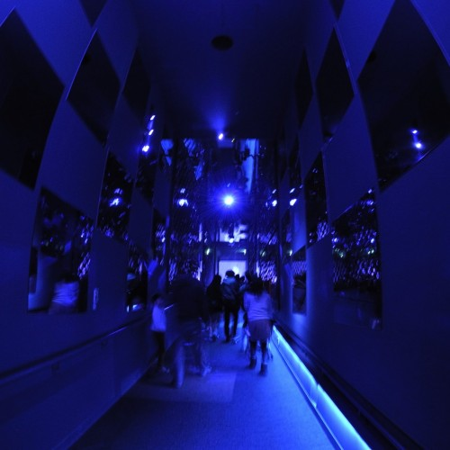 すみだ水族館 クラゲ万華鏡トンネル