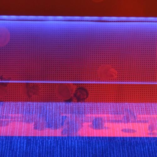 クラゲ万華鏡トンネル クラゲ 多重露光写真