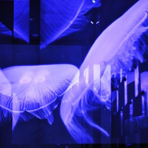クラゲ万華鏡トンネル クラゲの映像 多重露光写真