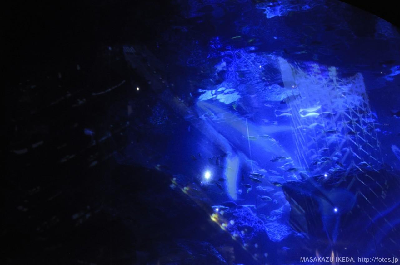 すみだ水族館 大水槽プロジェクトマッピング 小笠原のクジラ