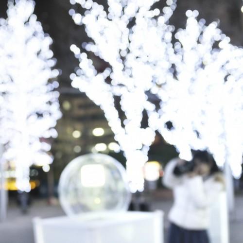 東京ドームシティのウインターイルミネーション2015 街路樹