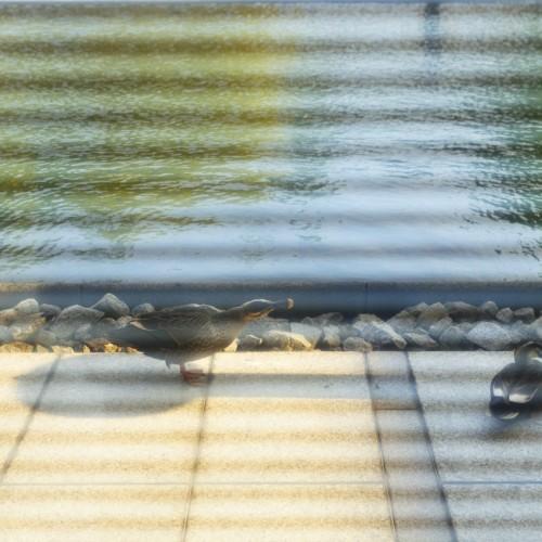 東京都現代美術館から外を眺めた景色