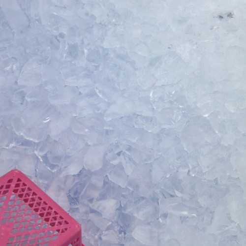 那珂湊おさかな市場 大量の保冷用氷