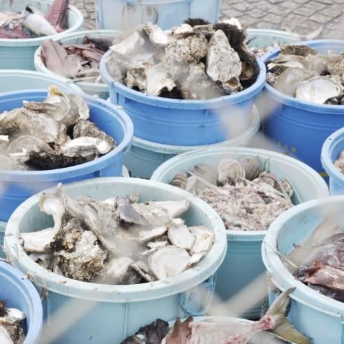那珂湊おさかな市場 食後の牡蠣の殻がはいったポリバケツ