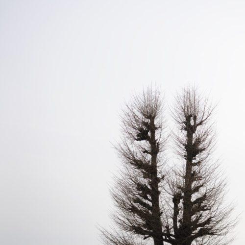 養寿院の木