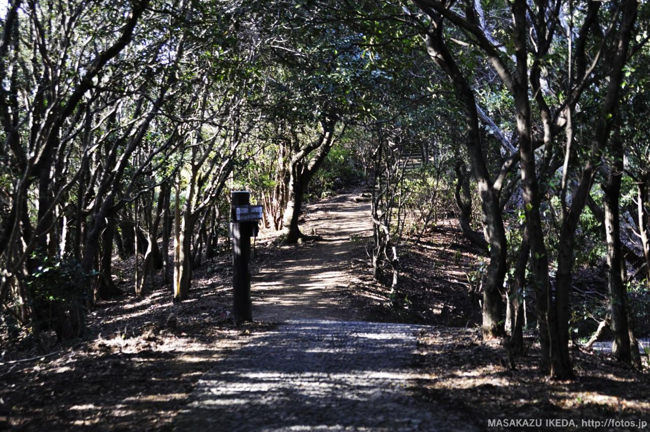 横山園地内の遊歩道