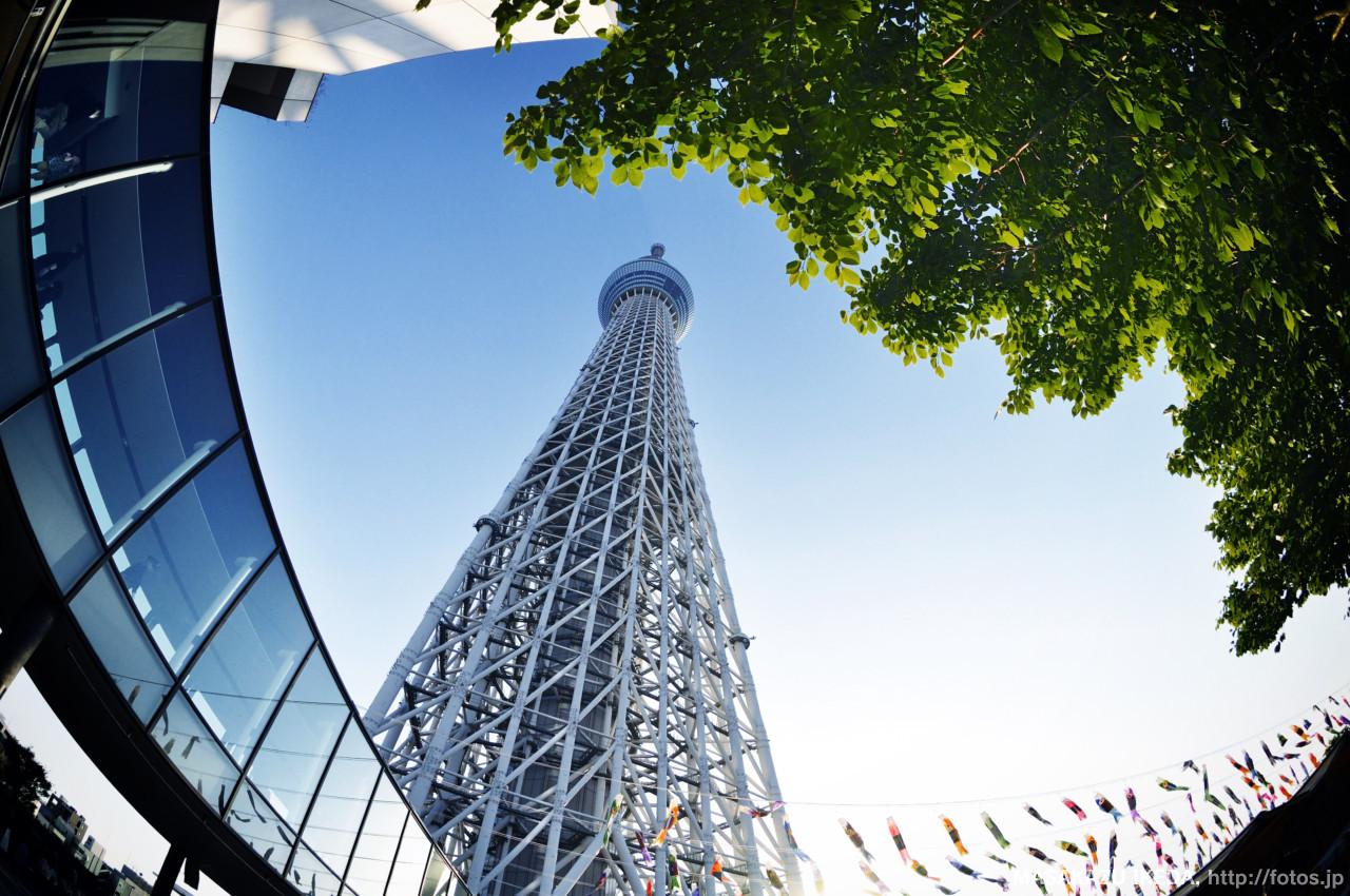 TOKYO SKYTREE 新緑と鯉のぼり