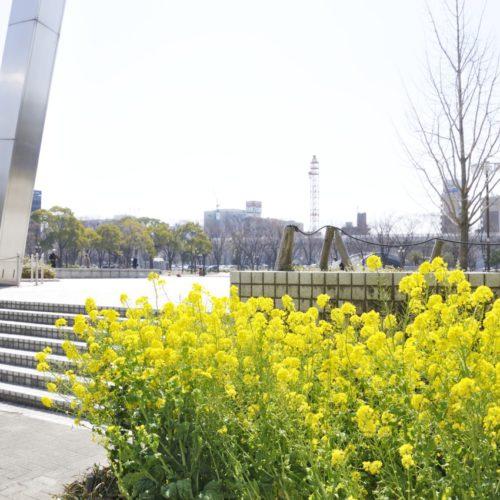 芸術と科学の杜・白川公園と菜の花
