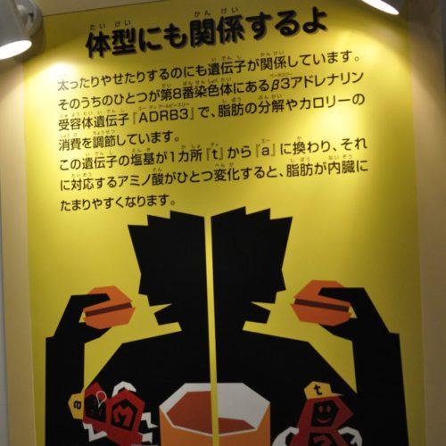 名古屋市科学館:体系にも関係するよ