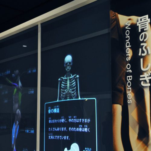 名古屋市科学館:骨のふしぎ
