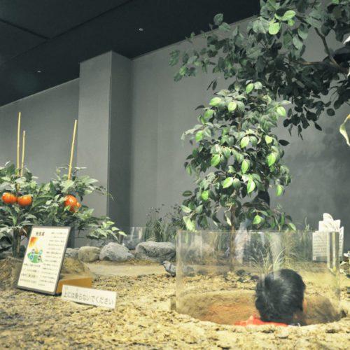 名古屋市科学館の展示